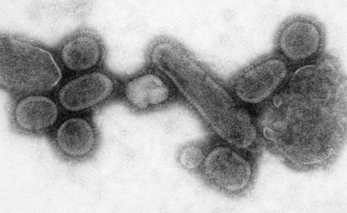 Reconstructed_Spanish_Flu_Virus