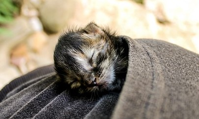 kitten-2948405_640